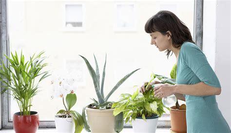 membuat kebun hidroponik di rumah cara membuat tanaman hidroponik di rumah untuk pemula