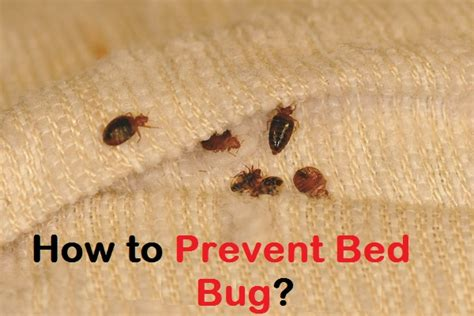 how to prevent bed head how to prevent bed bug
