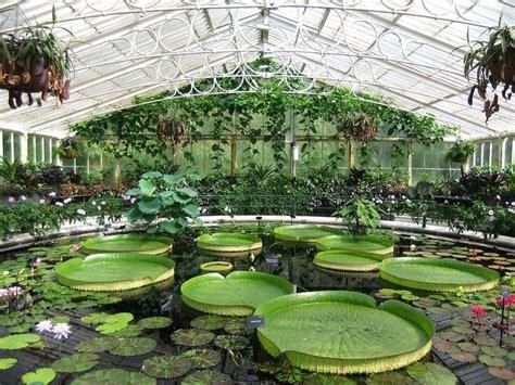 Kew Royal Botanical Gardens Magnificent Historic Waterlily House Royal Botanic Gardens Kew By Kam Hong Leung