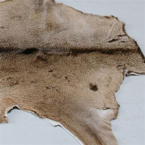 Deer Hide Rugs by White Tailed Deer Hide Rug From Curiosity Interiors Fur