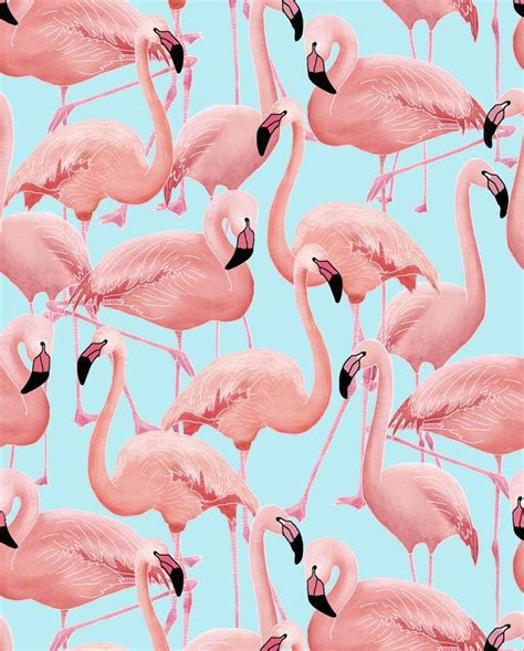 flamingo wallpaper on love it or list it a flamboyance of flamingos wallpaper snuugle pinteres