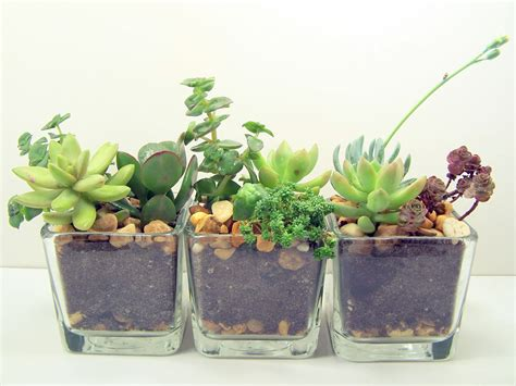 succulent planter terrarium succulent glass planters kit cute office desk