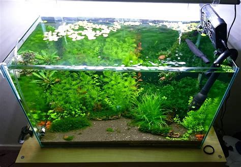 Lu Untuk Aquarium Kecil 26 model aquarium ikan hias minimalis terbaru 2018 dekor