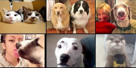puppy vines this 2014 vine compilation will make you want a puppy now