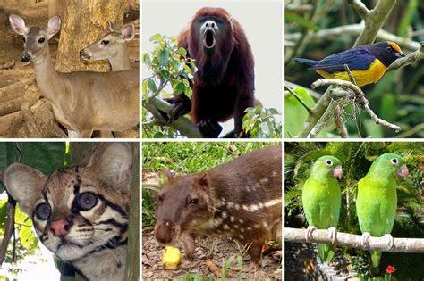 la fauna pictures 191 cuales son las caracter 237 sticas fauna de am 233 rica 187 respuestas tips