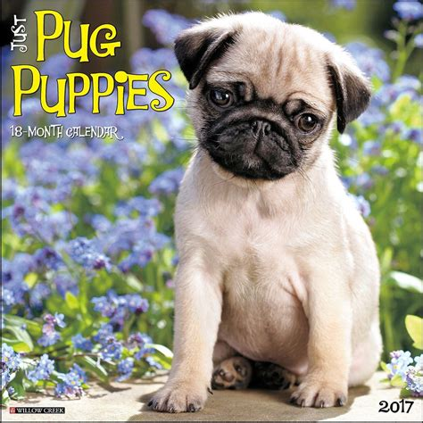 pug calendars just pug puppies 2017 wall calendar 9781682341742 calendars
