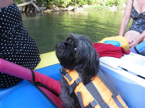 dog boat float take your dog on a missouri raft float trip future expat
