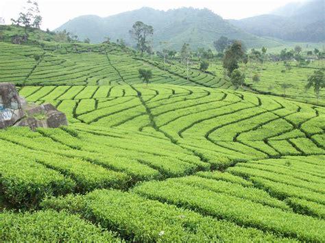 Bibit Bunga Aster Di Bandung limakaki 6 tempat wisata bandung yang dapat anda kunjungi