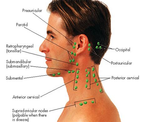 glands in the neck and throat diagram 301 moved permanently