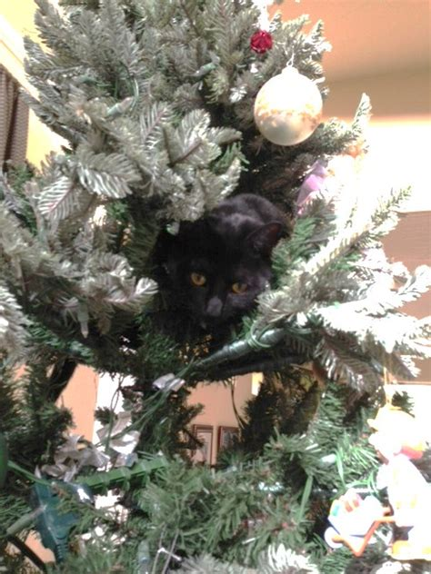 tree cat climb managedmoms com