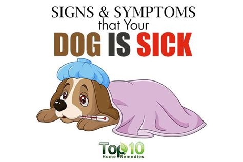 signs is sick 10 signs and symptoms that your is sick top 10 home remedies