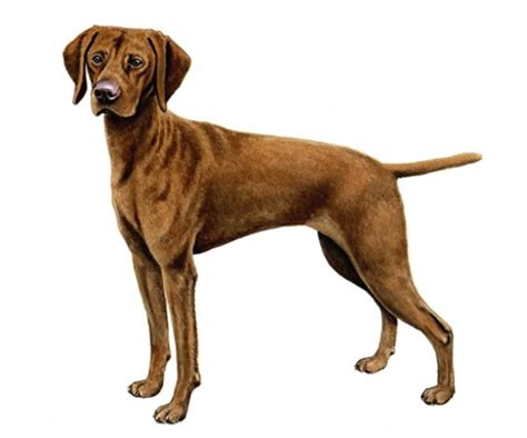 identify breed by characteristics breed dogs to identifying characteristics of mixed breed dogs breeds