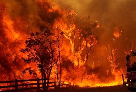 c fires of a naturalist the story of fourteen expeditions after american mammals classic reprint books eyewitness describes bushfire nightmare abc brisbane