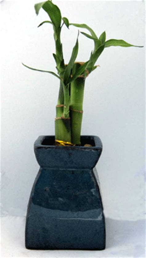 Bamboo Vases Wholesale by Wholesale Lucky Bamboo Vases