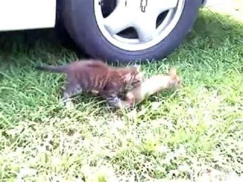 kills baby baby cat kills baby bunny