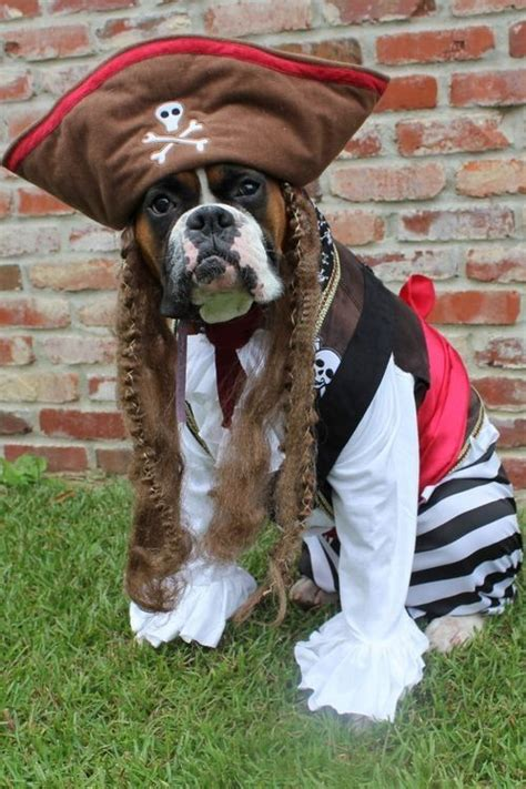 pirate costume for dogs 17 images about costumes on dogs in costumes