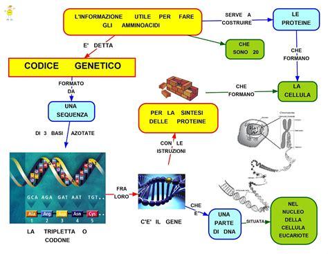ricerca sull alimentazione umana mappa concettuale codice genetico