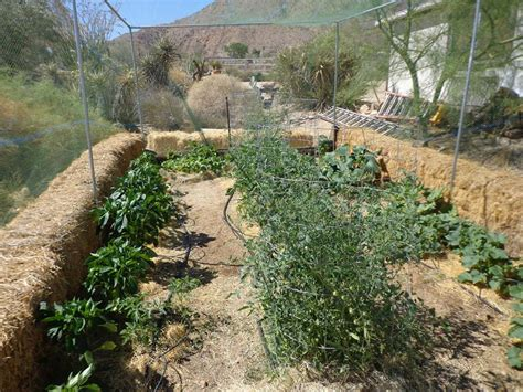 black goldhigh desert vegetable gardening black gold
