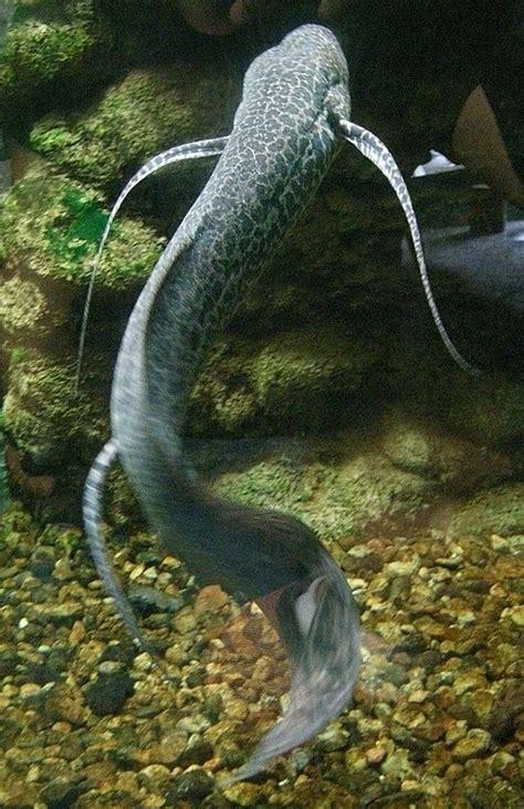 imagenes animales que respiran por los pulmones animales acuaticos que respiran por pulmones ejemplos