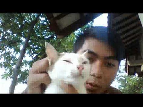 kucing mata biru dan hijau