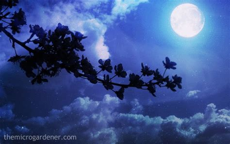 Gardening By The Moon The Benefits Of Moon Gardening The Micro Gardener