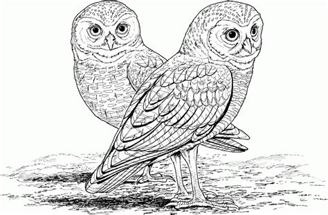 detailed owl coloring page owl coloring pages for adults free detailed owl coloring