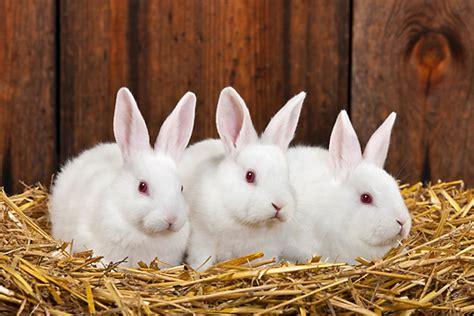 12 Md Rabbit Bery White november 1 2014 quot rabbit rabbit white rabbit quot julie randle mba