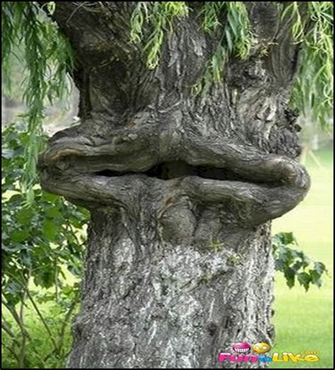 tree face funny looking trees ecards for facebook