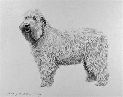 imagenes a lapiz de perritos im 225 genes arte pinturas dibujos de perros hechos a lapiz