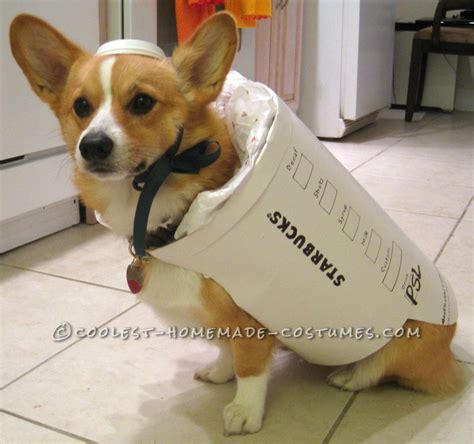 starbucks puppy drink starbucks costume easy and inexpensive