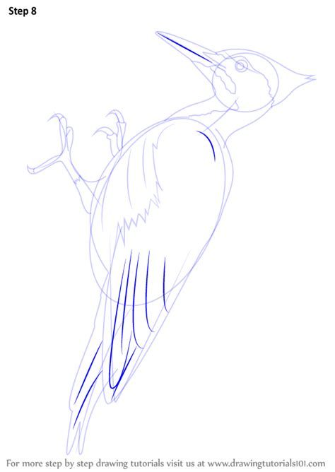 How To Draw A Woodpecker Step By Step