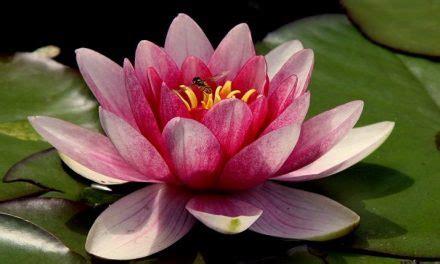 sognare fiori sognare fiori significato e simbolismo dei fiori nei sogni