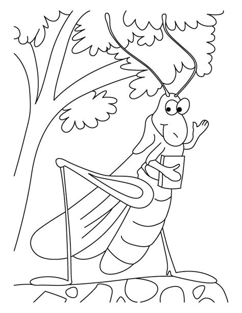 coloring page grasshopper pictures of animals coloring kids grasshoppers coloring