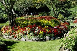 flower bed butchart s gardens victoria plant nature