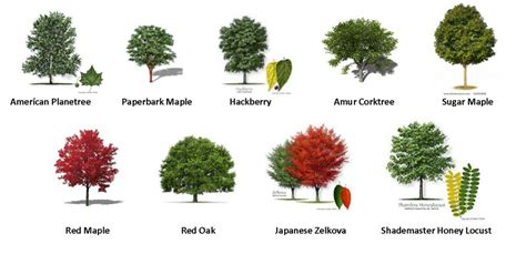tree types 55 trees types of trees patterns pinterest gardens
