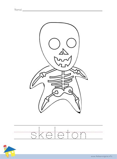 Axial Skeleton Worksheet Answers by Printable Diagram Of The Digestive System Printable