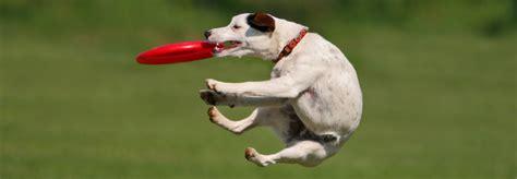 puppy fetch fetch enrichment program speaking co