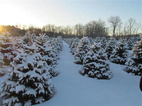 top 28 christmas tree farms harrisburg pa brookside