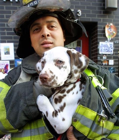 firehouse dog house firehouse dog cute animals pinterest
