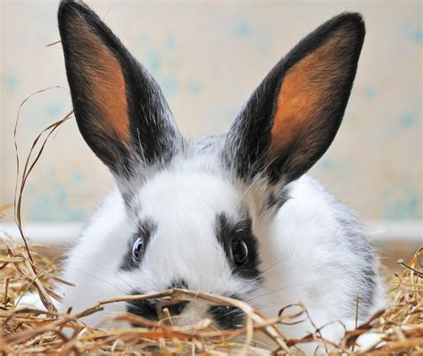 rabbit  sick    reach  vet petfinder
