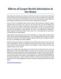 Effects of carpet beetle infestation in the home pdfsr com