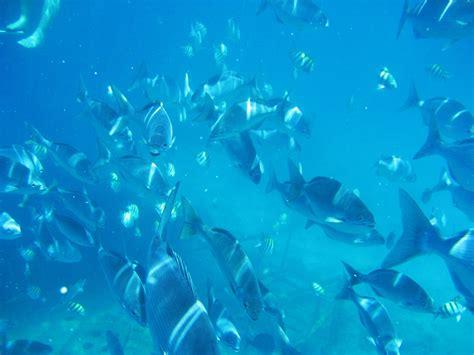dive barbados diving barbados
