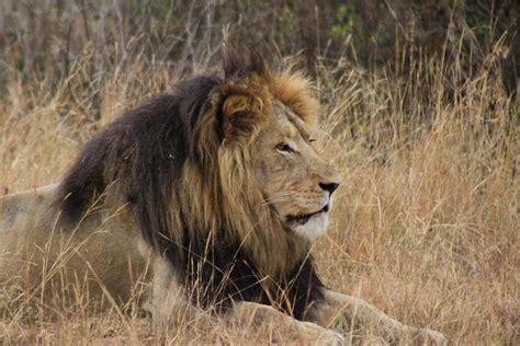 Mit Freundlichen Grã ã En Im Namen Bedrohte Tiere In Afrika Praktikawelten Magazin