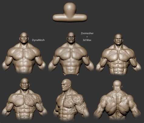 zbrush tutorial human body 93 best images about 40k space marine physiology on