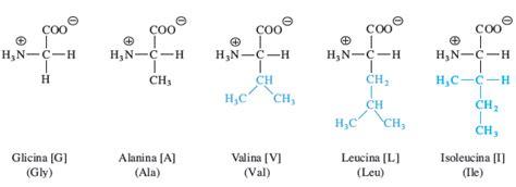 aminoacidos con cadenas alifaticas bioqu 237 mica los amino 225 cidos y la estructura primaria de