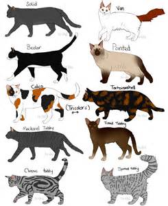 cat color patterns cat fur patterns by nixhil on deviantart