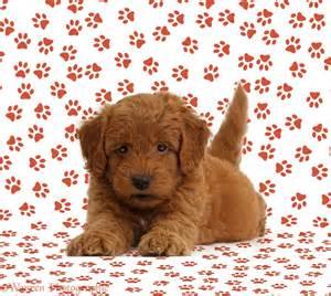 pictures puppies print free coloring pages art coloring pages
