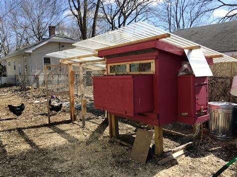 backyard chickens in winter keeping backyard chickens in the winter homesteading and