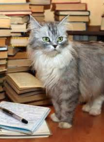 cats and books i could on this and other poems by cats the book