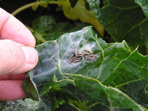 pesticides  fungicides  kitchengarden ingredients